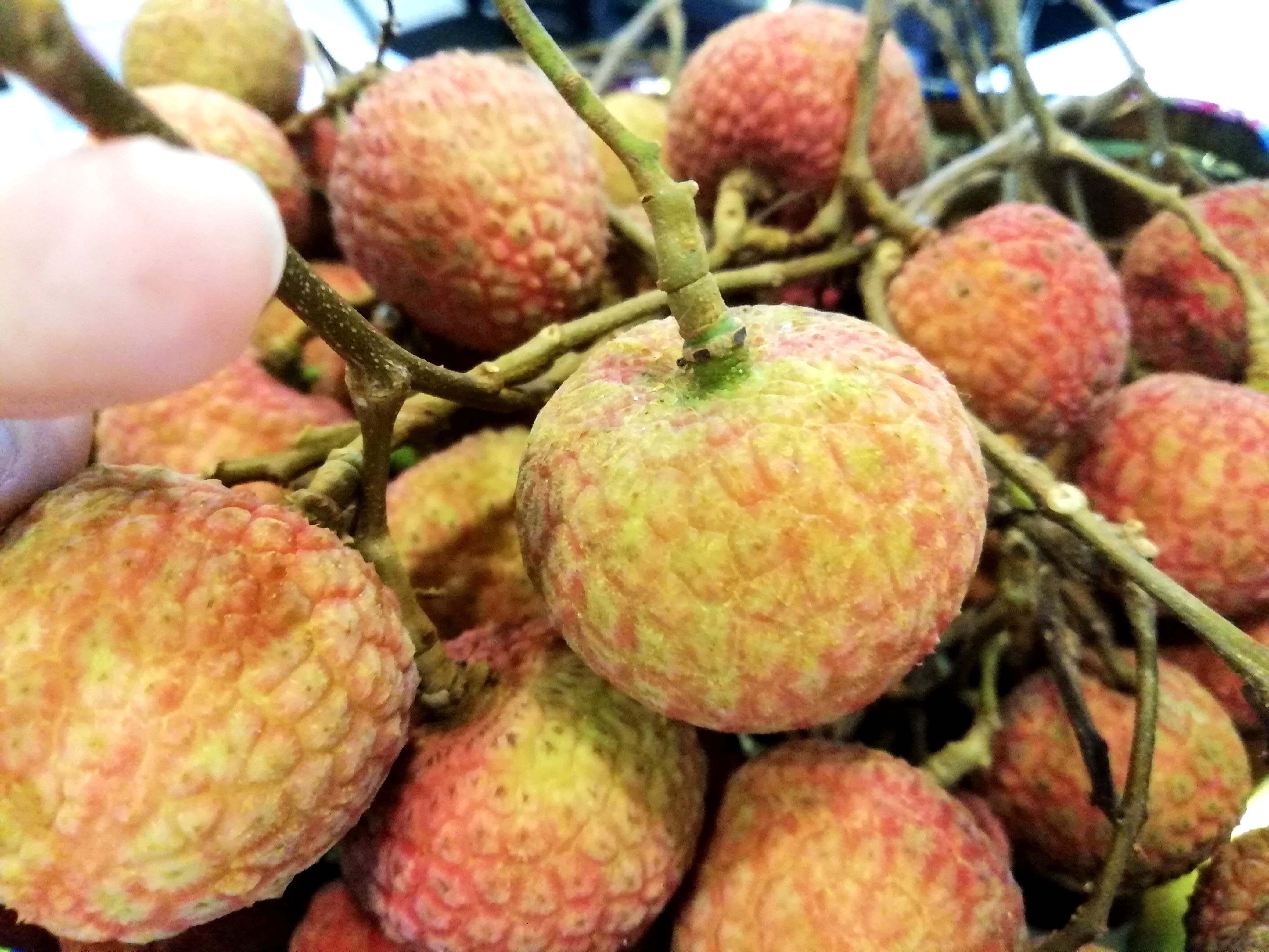 Panel Light Manufacturer KEOU- Delicious Litchi